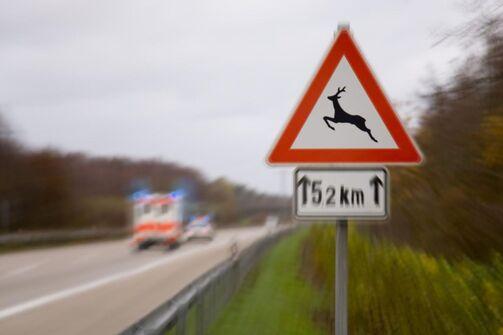 Wildwechsel Wild Verkehrsschild